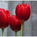 Flores no dia das mães