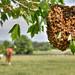 May Swarm