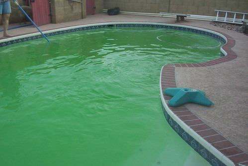 Green Pool A Part In Our Pool Died Making It Turn Green B Flickr