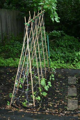 ... Trellis In Garden | By Yvetteu