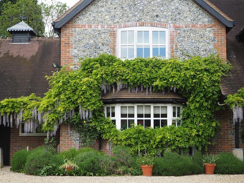 Chilbolton-wisteria