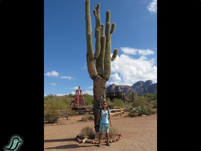 PIC: Giant Saguaro Cactus