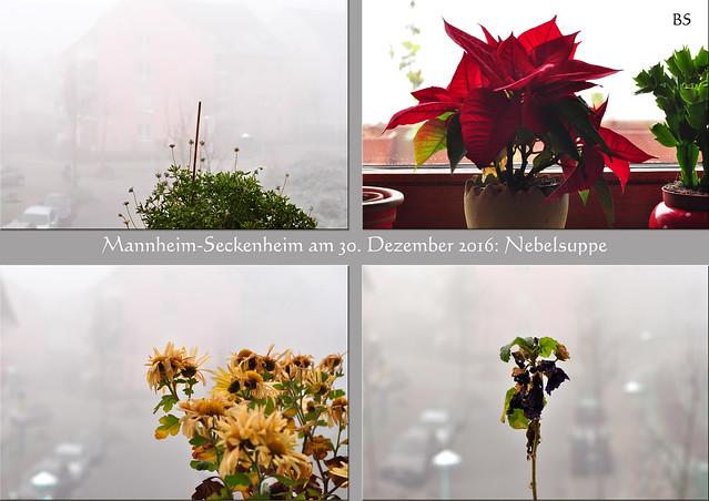 """Wetter Mannheim-Seckenheim am 30. Dezember 2016: der dichte Nebel hat sich den ganzen Tag hartnäckig gehalten ... eine dicke, fette """"Nebelsuppe"""". Ein Blick durchs Fenster und vom Balkon zeigt: buchstäblich NICHTS ... Fotos: Brigitte Stolle, Mannheim"""