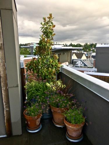 Chez moi - Roof