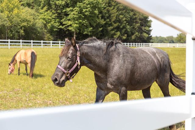 Dark Horse Through Fence