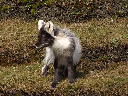 svalbard-wildlife-1 2