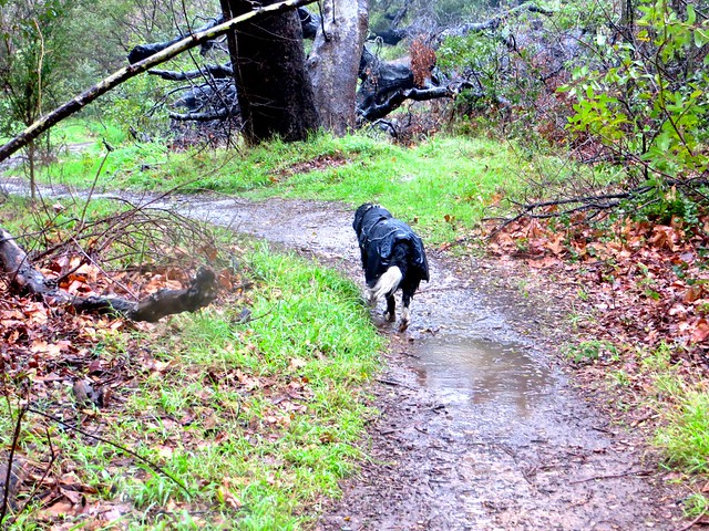rainy day dog walk