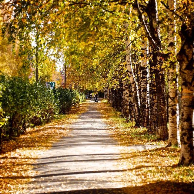 Золотая осень. Серов by Max Karpovich
