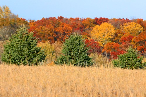 White Spruce And Red Oak Trees Near Lime Springs Ia 854a35 Flickr