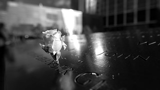 New York - New York - 9/11 Memorial - white birthday rose | by riese.laurenc