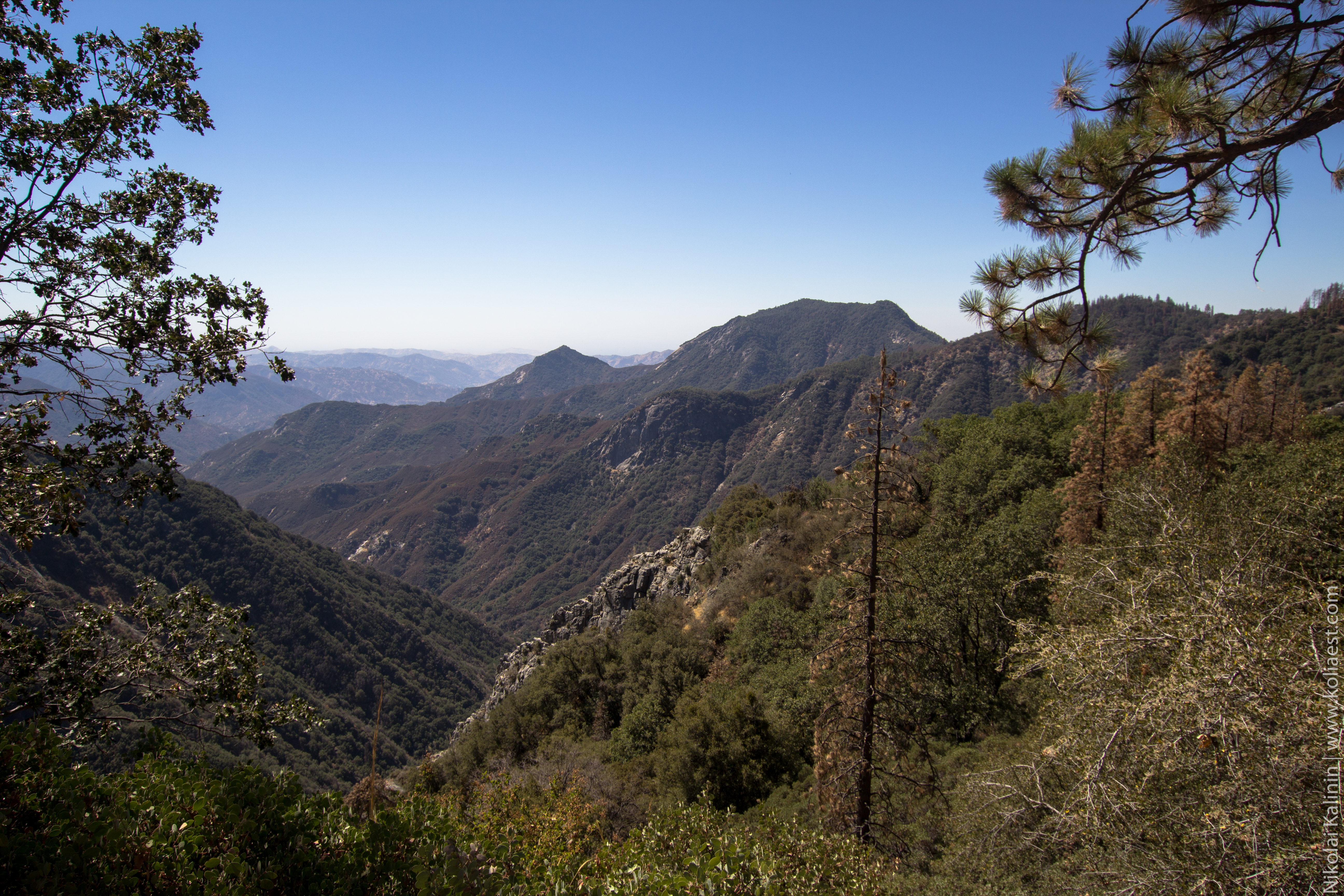 Sequoia-67