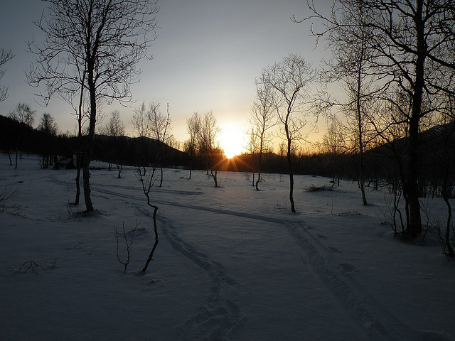 Cold day in the forest, -15 C