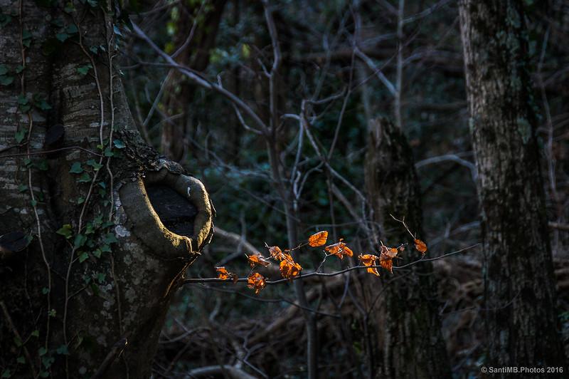 Luces y sombras en el bosque