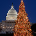 2005 U.S. Capitol Christmas Tree