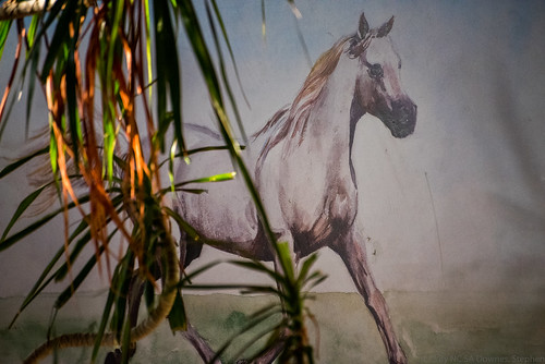 The Horse and the Palm Tree | by Stephen Downes