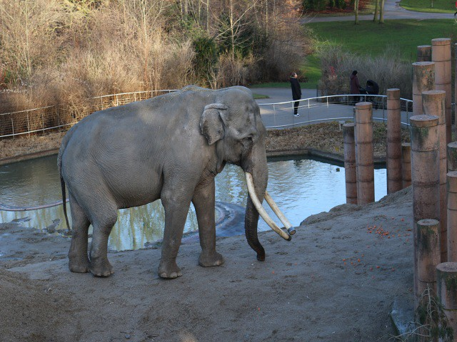 zoo copenhaga 4 obiective turistice copenhaga