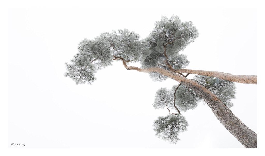 frozen pines explored dec 31 2016 happy new year flickr