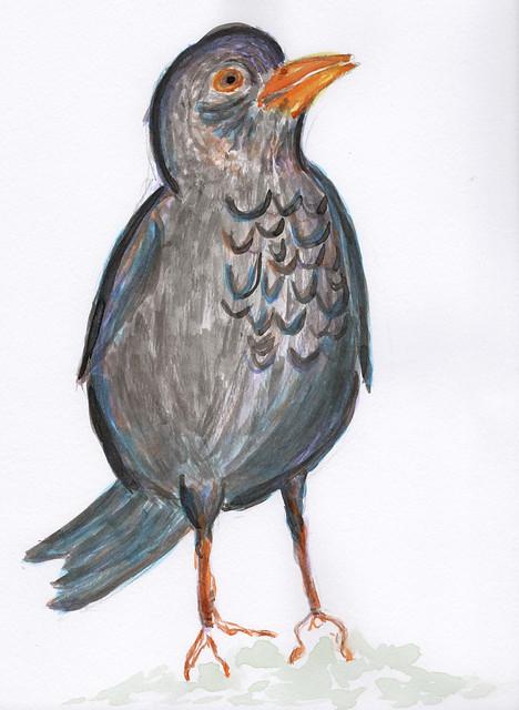blackbird e