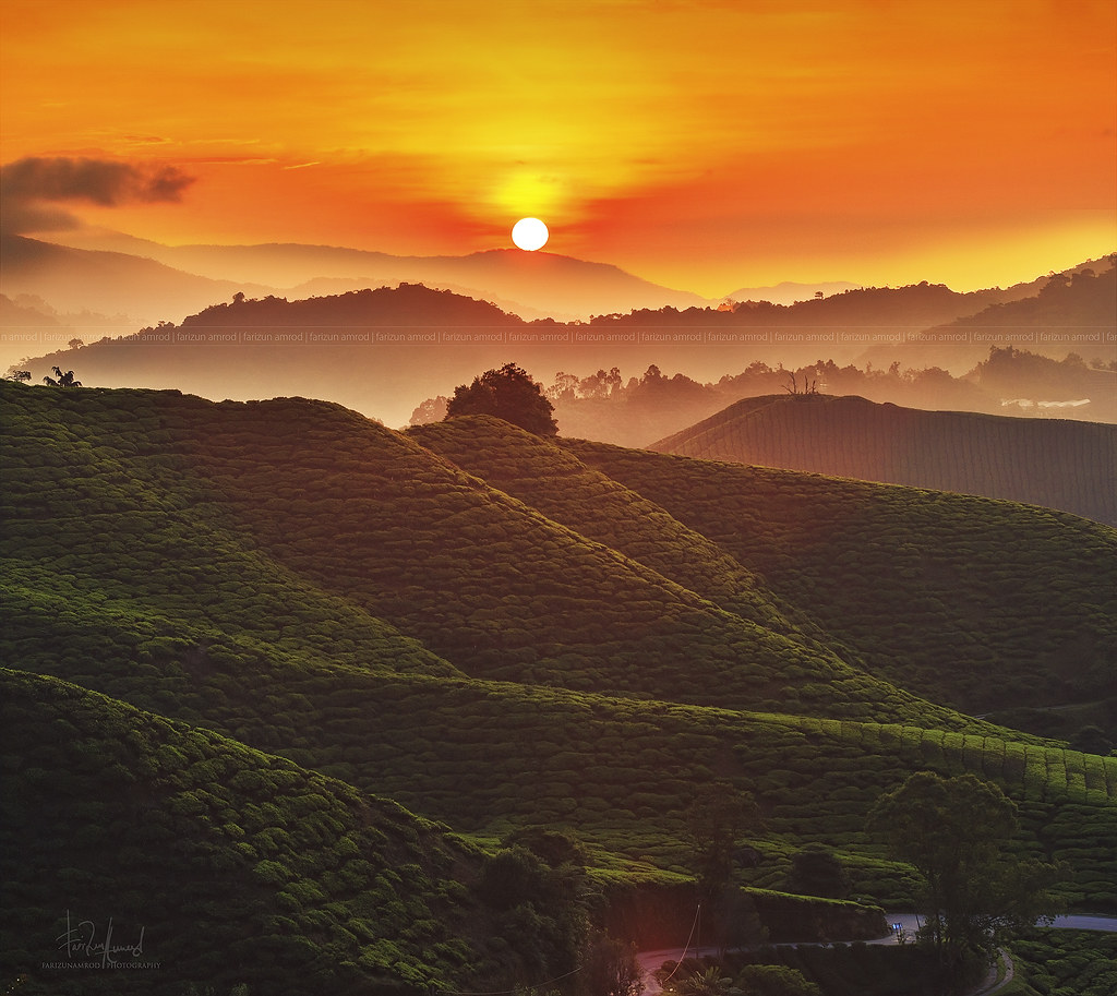 Morning in Cameron Highlands