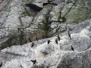 Birdsafari 12