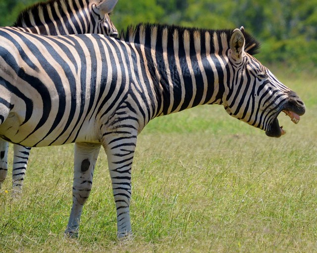 Zebras hate you for no reason why amdahls law is misleading in a zebras revisited amdahls law isnt so black and white malvernweather Choice Image