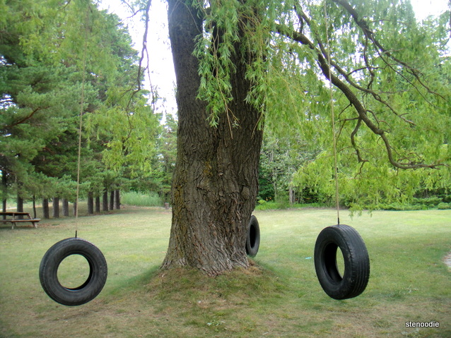 tire swings on a tree