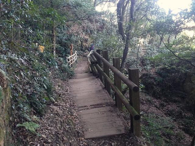 金華山 めい想の小径 登山道 木策