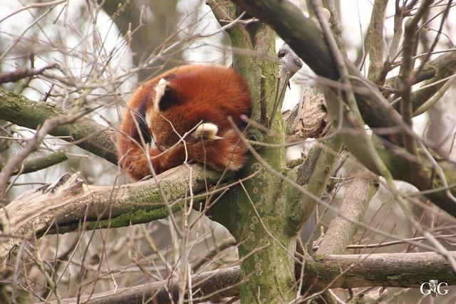 Ausflug Tierpark Friedrichsfelde 05.03.1743