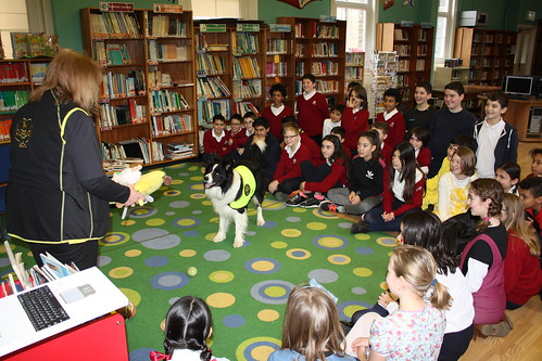 Therapy dog. World Book Day