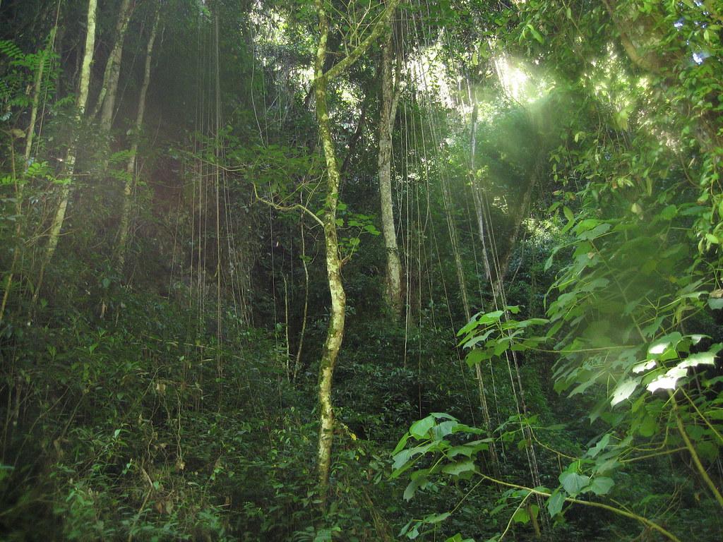 Jungle Vines | Mark Low! | Flickr