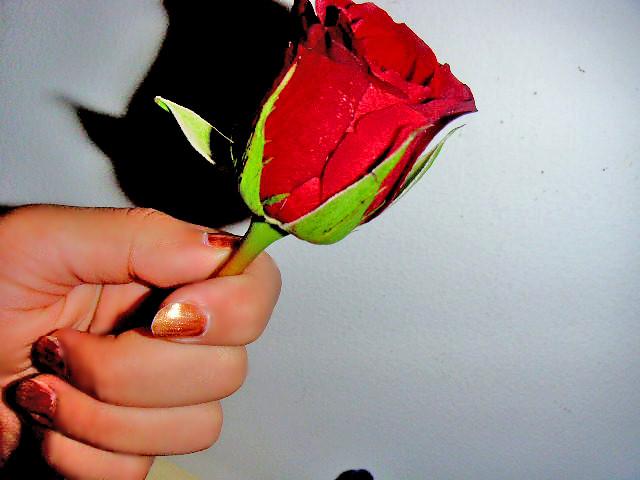 Hvad Repræsenterer En Rose