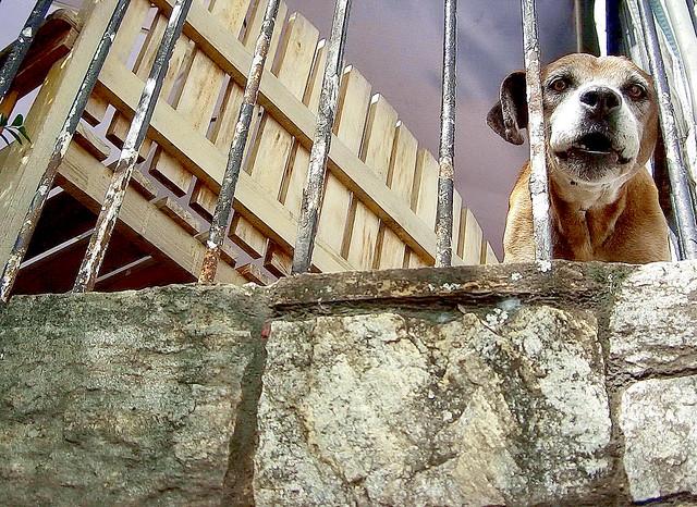 Barking Dogs Seldom Bite Meaning In Telugu
