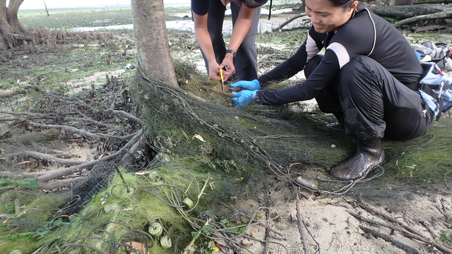 Removing an abandoned fish net at Kranji