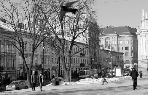 Lviv Streets I