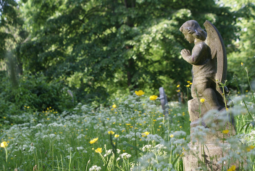 Statue d'ange entouré par la végétation.