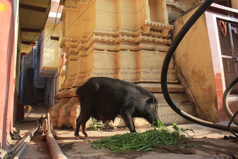 В Индии все живут дружно