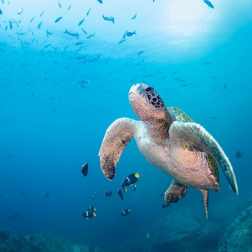 Galapagos-WEB-GettyImages-567892263-600x600