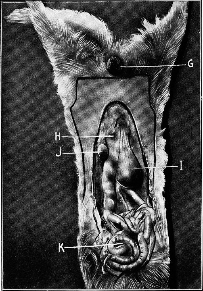 Image From Page 141 Of Animal Castration A Book For The Flickr
