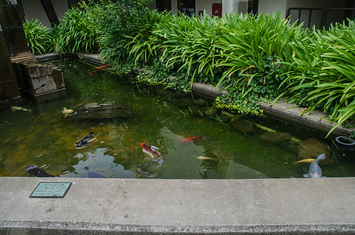 porter college koi pond uc santa cruz is made up of 10
