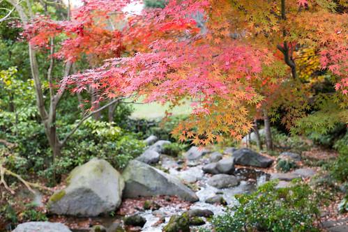 autumn_leaves_2017_04