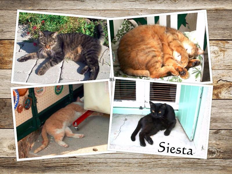 Katzen Urlaubskatzen Siesta ... Fotos: Brigitte Stolle