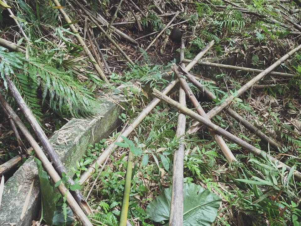 Tomodan水圳被倒竹、枯枝落葉覆蓋。