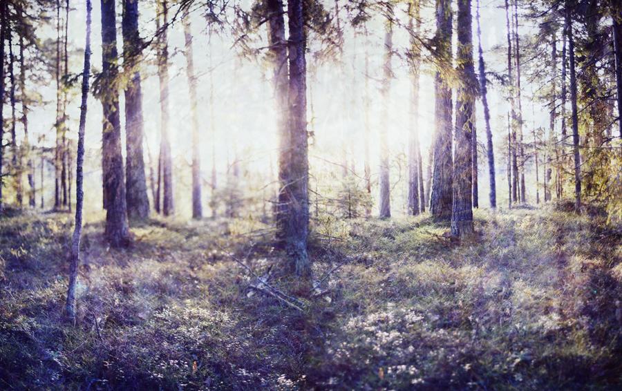 forestandice