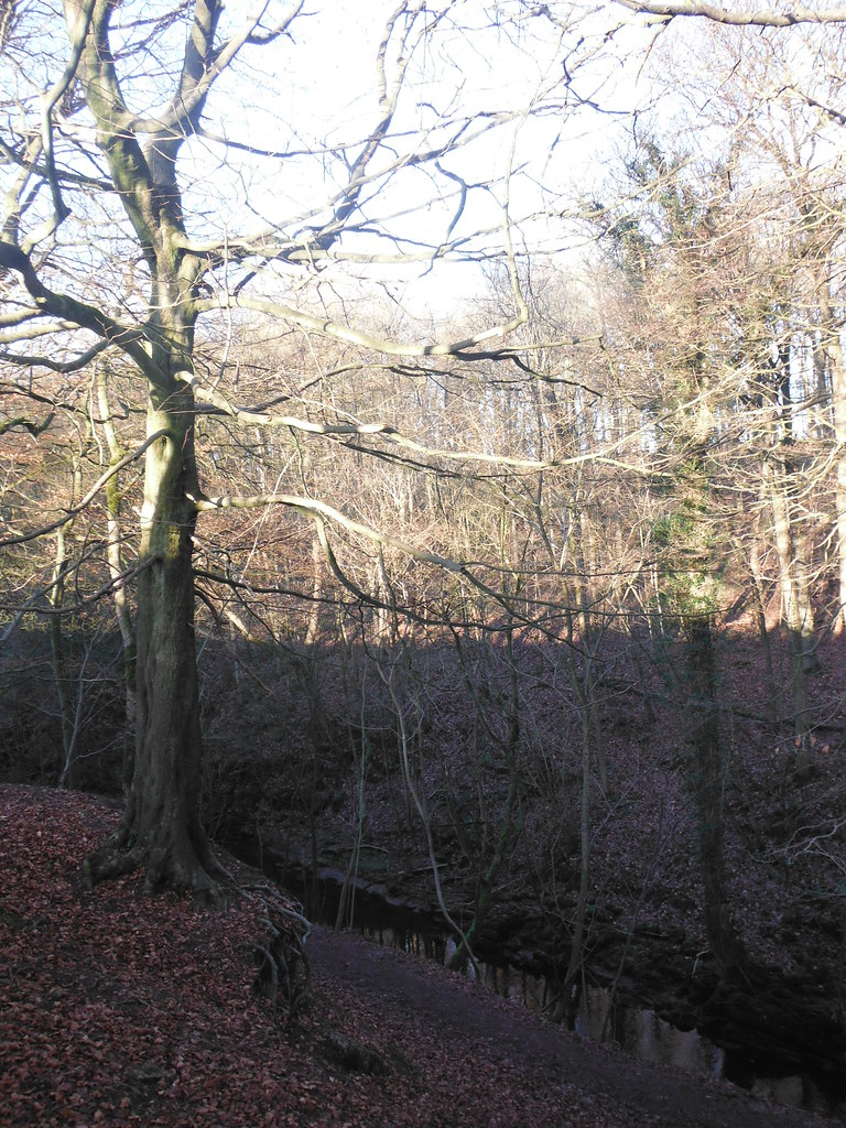 Skipton Wood 13