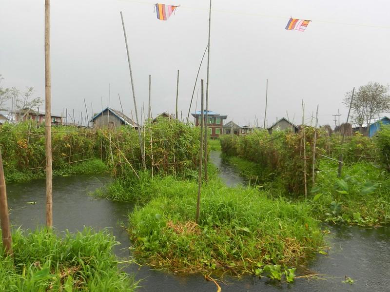 Помидоры озера Инле, Мьянма