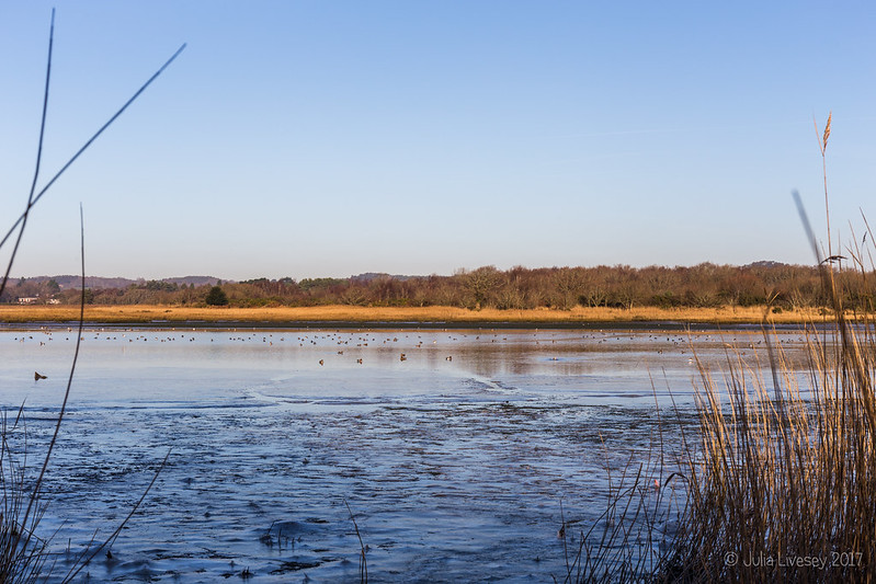 An icy Lychett Bay at low tide