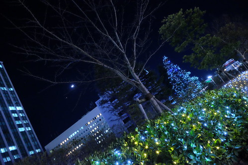 winter illumination tree at Chiba Institute of technology 01