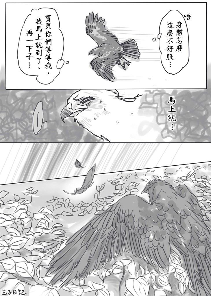 20151024_紅豆生南國  鳥來死幾隻?策劃:環境資訊中心;漫畫:玉子日記