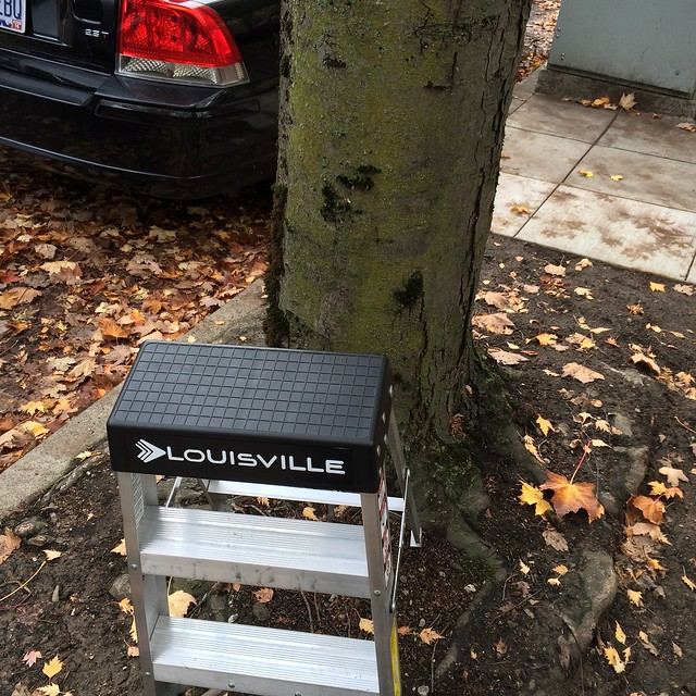 A stepladder in the almost-mud at the foot of a tree.