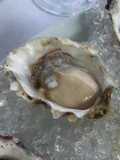 Oyster | by Josephine2004